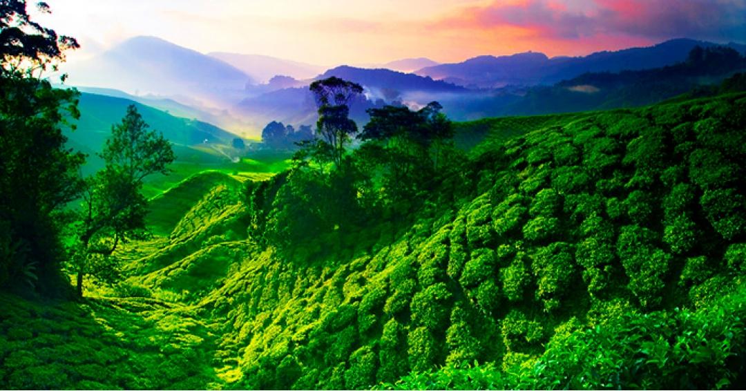 ارتفاعات کامرون در مالزی